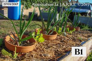 Bac B1 - jardin de Quartier - 27 mars 2017-2
