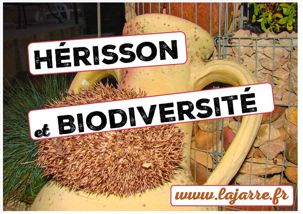 Hérisson égal biodiversité et zéro phyto - association la jarre écocitoyenne