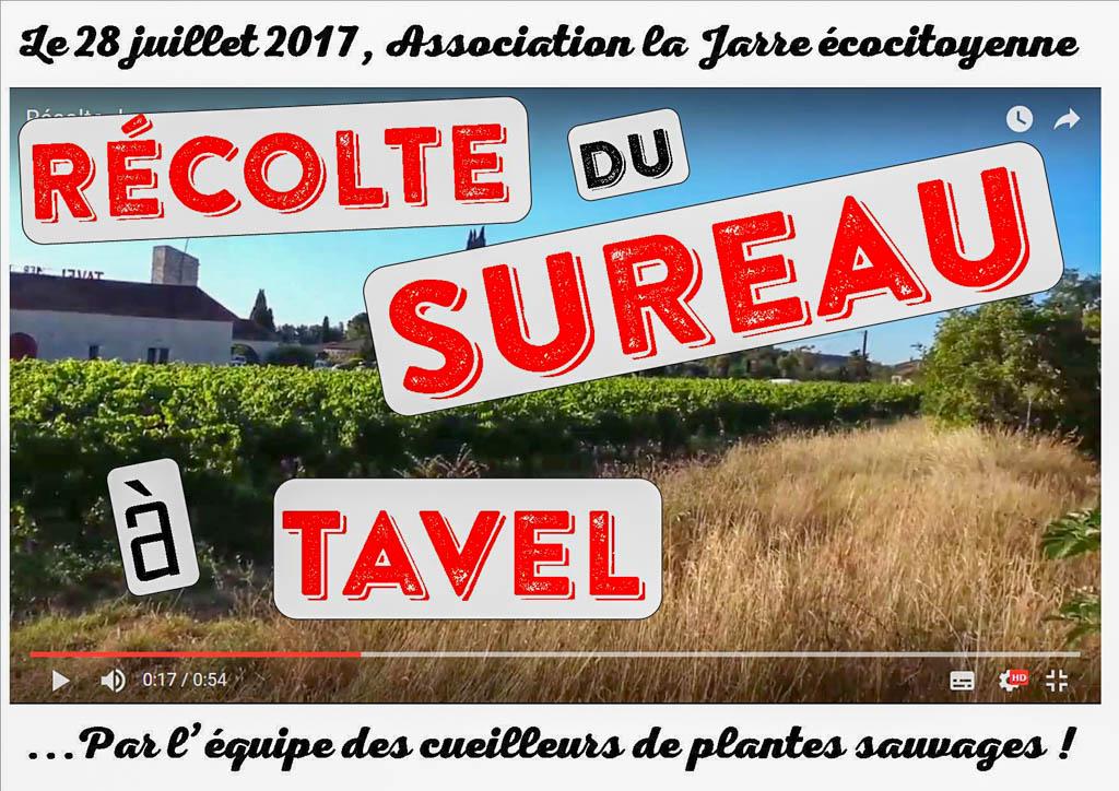 Récolte du sureau à Tavel (Atelier cueillette sauvage pour l'atelier confiture)
