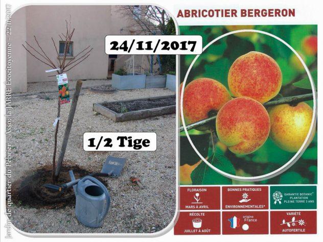 Achat - Abricotier Bergeron - 45euros - jardin de quartier - 24-11-2017 - Association la jarre écocitoyenne