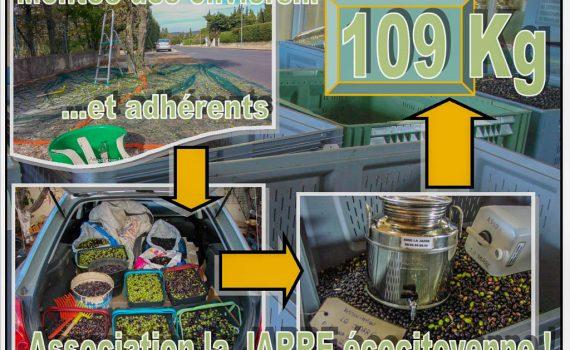 ramassage des olives communales 2017 - 109kg - association la jarre écocitoyenne