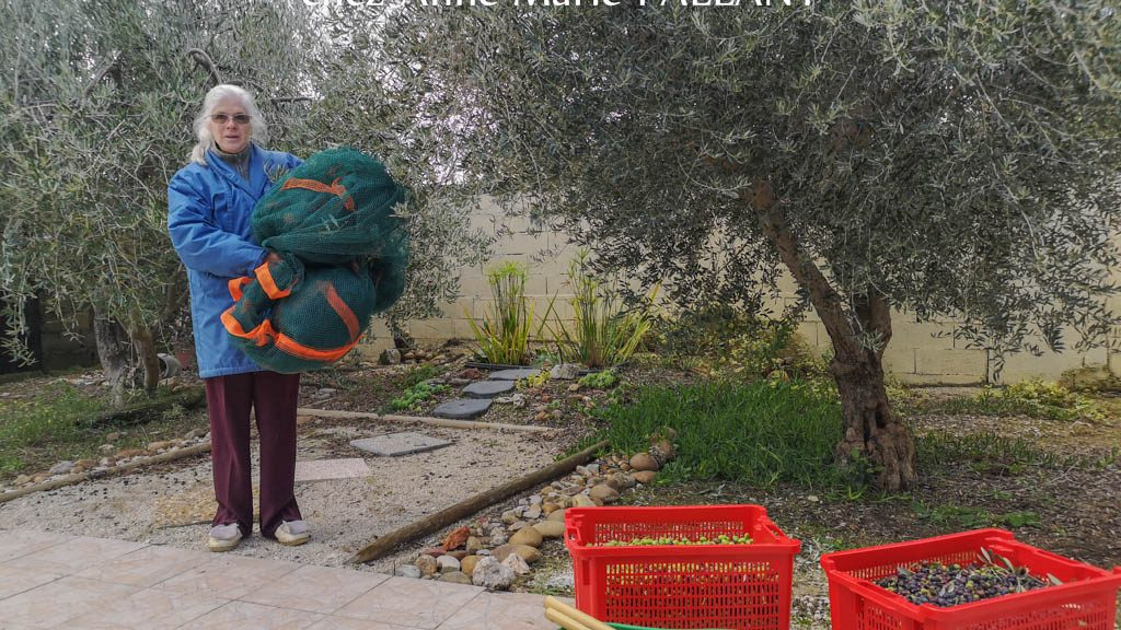 Anne-Marie Pallant - Le plus bel olivier de 2019 - Association la JARRE Écocitoyenne