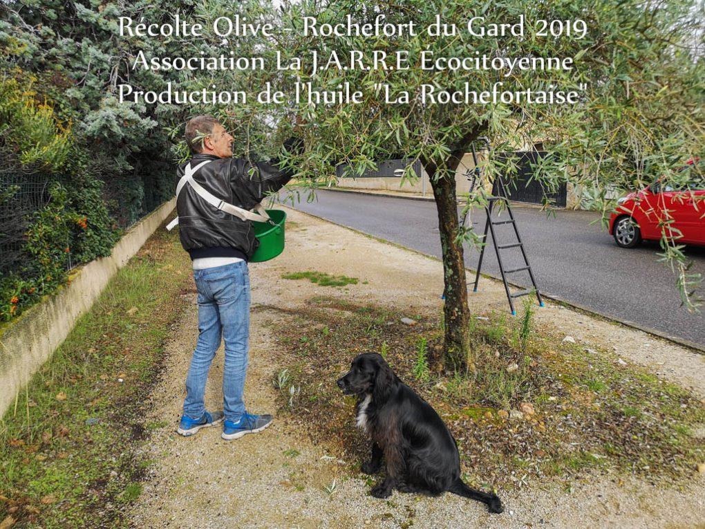 Thierry TREDEZ - récolte olive Rochefort du Gard