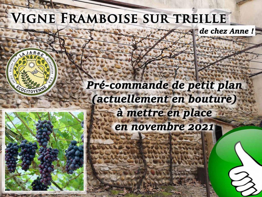 Partage-de-bouture-de-Vigne-framboise--la-JARRE