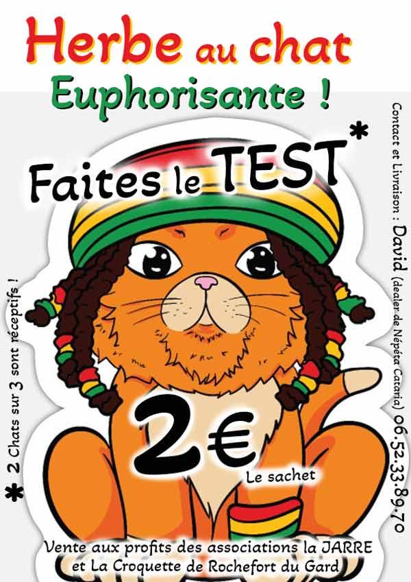 Vente herbe aux chats à Rochefort du Gard
