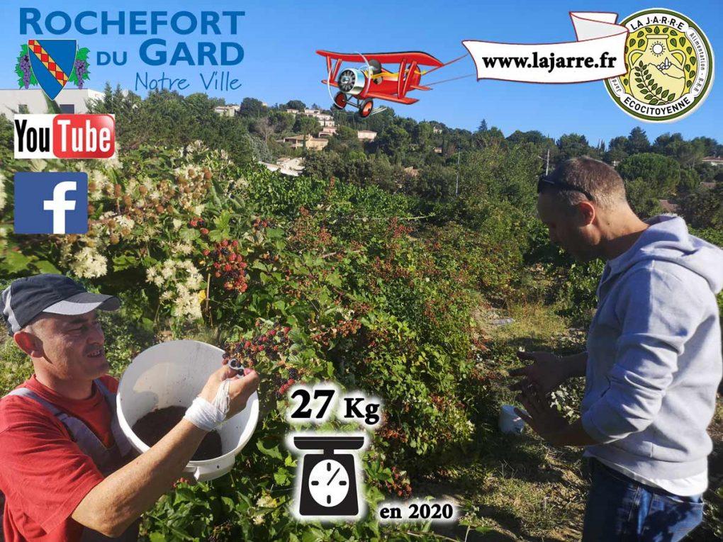 Cueillette-des-mûres-à-Rochefort-du-Gard---association-la-jarre---David-G